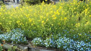 2021年4月4日 富士森公園の花壇です
