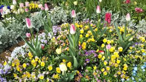 2021年4月6日 富士森公園の花壇です