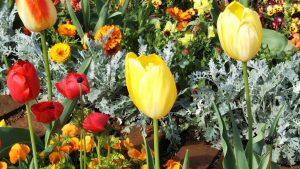 2021年4月15日 朝の富士森公園の花壇です