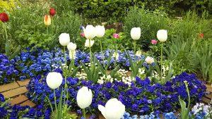 2021年4月17日 朝の富士森公園の花壇です