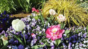2021年4月18日 朝の富士森公園の花壇です