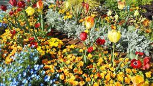 2021年4月19日 朝の富士森公園の花壇です