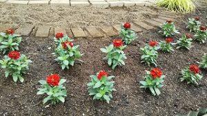 2021年5月29日 朝の富士森公園の花壇です