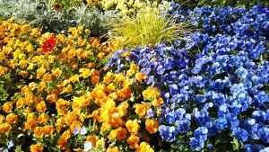2021年5月8日 朝の富士森公園の花壇です