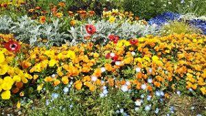 2021年5月10日 朝の富士森公園の花壇です