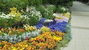 2021年5月11日 朝の富士森公園の花壇です