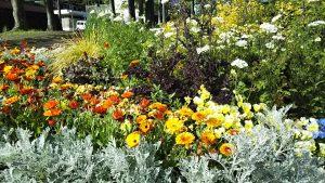 2021年5月4日 朝の富士森公園の花壇です