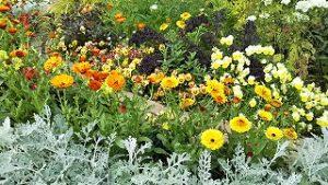 2021年5月15日 朝の富士森公園の花壇です