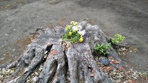 2021年5月17日 朝の富士森公園の浅間神社にあった切り株に。。。
