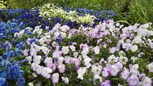 2021年5月17日 朝の富士森公園の花壇です