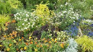2021年5月28日 朝の富士森公園の花壇です
