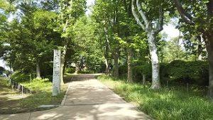 2021年6月14日 朝の富士森公園の遊歩道です