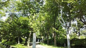 2021年6月11日 朝の富士森公園遊歩道です
