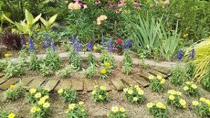 2021年6月27日朝の富士森公園花壇です