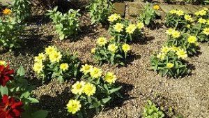 2021年6月28日朝の富士森公園の花壇です