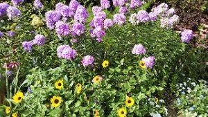 2021年7月24日朝の富士森公園の花壇です