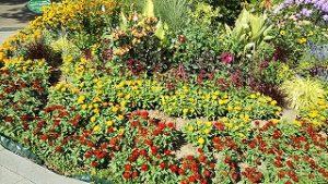 2021年7月25日朝の富士森公園の花壇です