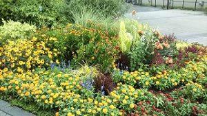 2021年7月27日朝の富士森公園の花壇です