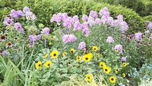 2021年7月26日朝の富士森公園の花壇です