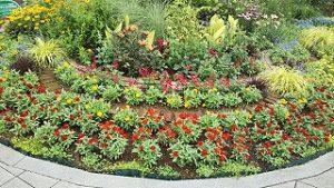 2021年7月11日朝の富士森公園の花壇です