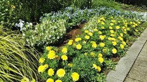 2021年7月12日朝の富士森公園の花壇です