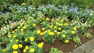 2021年7月5日朝の富士森公園の花壇です