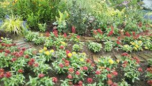 2021年7月2日朝の富士森公園の花壇です