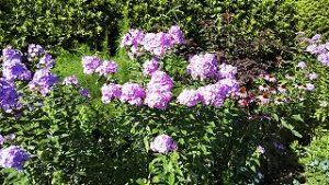 2021年7月17日朝の富士森公園の花壇です