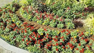 2021年7月10日朝の富士森公園の花壇です