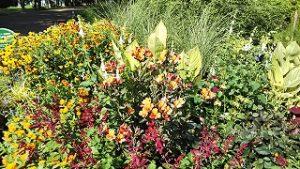 2021年8月1日朝の富士森公園の花壇です