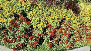 2021年8月10日朝の富士森公園の花壇です