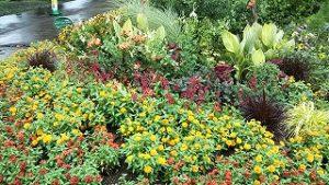 2021年8月8日朝の富士森公園の花壇です