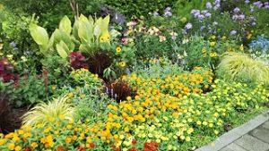 2021年8月9日朝の富士森公園の花壇です