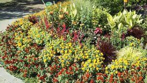 2021年8月6日朝の富士森公園の花壇です