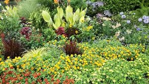 2021年8月13日朝の富士森公園の花壇です