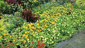 2021年8月16日朝の富士森公園の花壇です