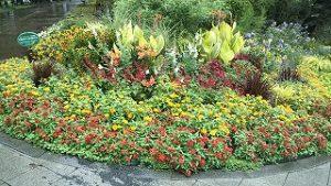 2021年8月15日朝の富士森公園の花壇です