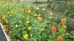 2021年8月23日朝の富士森公園の花壇です