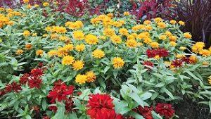 2021年9月17日朝の富士森公園の花壇です
