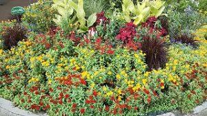 2021年9月19日朝の富士森公園の花壇です