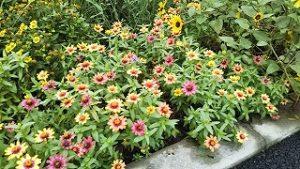 2021年9月5日朝の富士森公園の花壇です