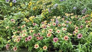 2021年9月3日朝の富士森公園の花壇です