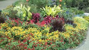 2021年10月12日朝の富士森公園の花壇です