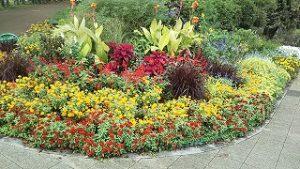 2021年10月14日朝の富士森公園の花壇です