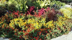 2021年10月11日朝の富士森公園の花壇です